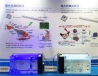 石斑魚苗新希望!億光電子與台大團隊研發出石斑魚專用LED燈具!